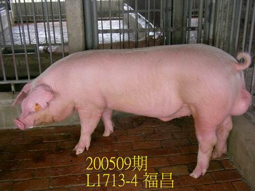 中央畜產會200509期L1713-04拍賣照片