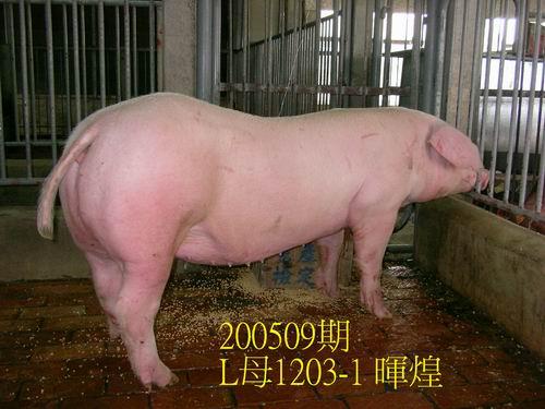 中央畜產會200509期L1203-01拍賣照片