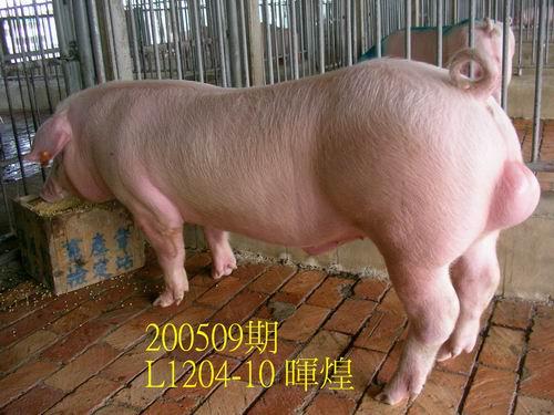中央畜產會200509期L1204-10拍賣照片