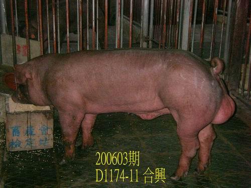 中央畜產會200603期D1174-11拍賣照片