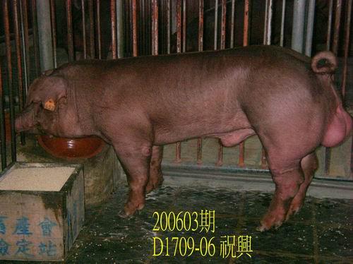 中央畜產會200603期D1709-06拍賣照片
