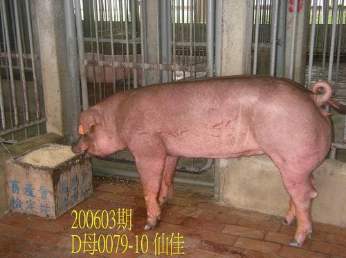 中央畜產會200603期D0079-10拍賣照片