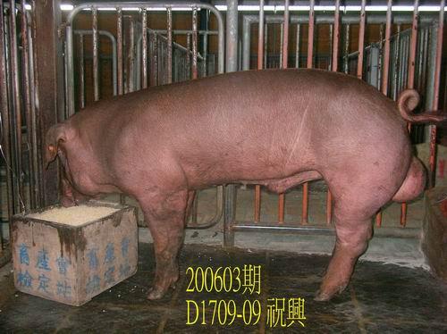 中央畜產會200603期D1709-09拍賣照片