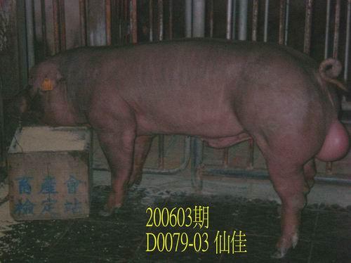 中央畜產會200603期D0079-03拍賣照片