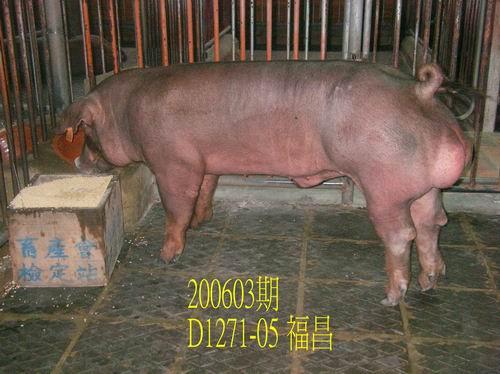 中央畜產會200603期D1271-05拍賣照片