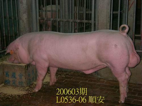 中央畜產會200603期L0536-06拍賣照片