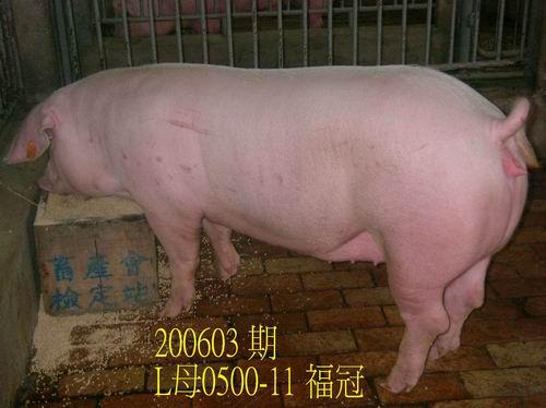 中央畜產會200603期L0500-11拍賣照片