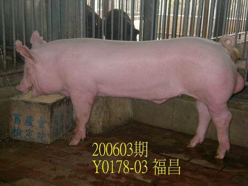 中央畜產會200603期Y0178-03拍賣照片