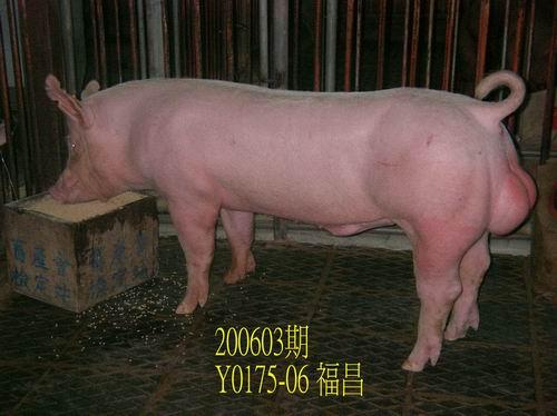 中央畜產會200603期Y0175-06拍賣照片