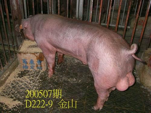 中央畜產會200507期D0222-09拍賣照片