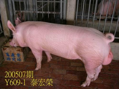 中央畜產會200507期Y0609-01拍賣照片
