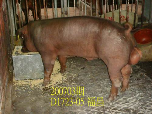 中央畜產會200703期D1723-05拍賣照片