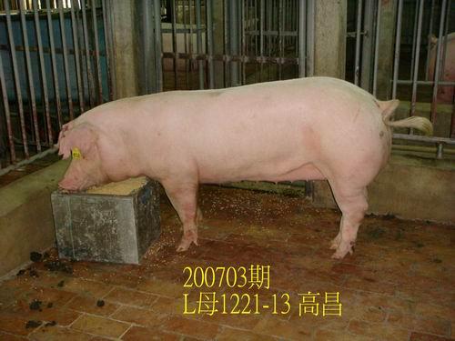 中央畜產會200703期L1221-13拍賣照片