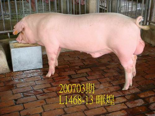 中央畜產會200703期L1468-13拍賣照片