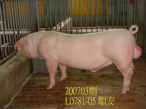 中央畜產會200703期L0781-05拍賣照片