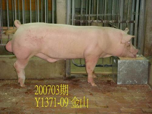 中央畜產會200703期Y1371-09體型-尾根相片