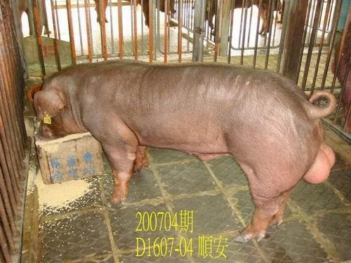 中央畜產會200704期D1607-04拍賣照片