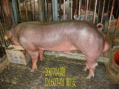 中央畜產會200704期D1607-01拍賣照片