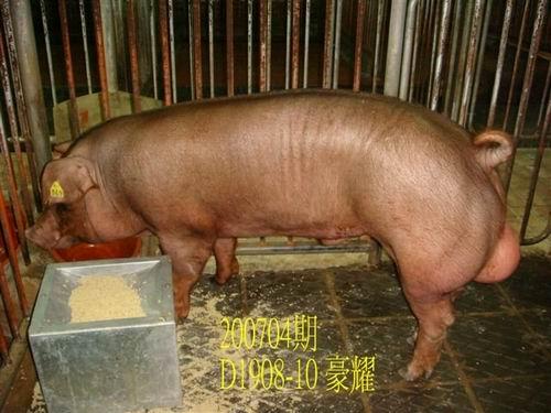 中央畜產會200704期D1908-10拍賣照片