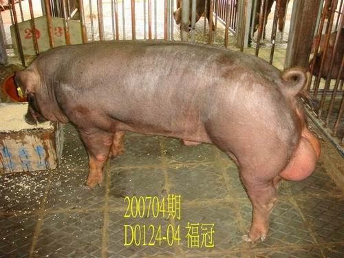 中央畜產會200704期D0124-04拍賣照片