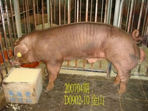 中央畜產會200704期D0902-10拍賣照片