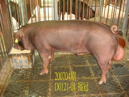 中央畜產會200704期D0121-01拍賣照片