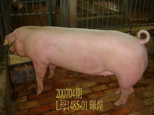 中央畜產會200704期L1485-01拍賣照片
