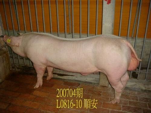 中央畜產會200704期L0816-10拍賣照片