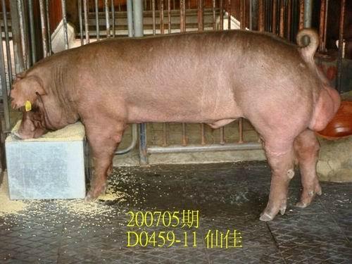 中央畜產會200705期D0459-11拍賣照片