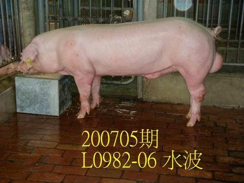 中央畜產會200705期L0982-06拍賣照片