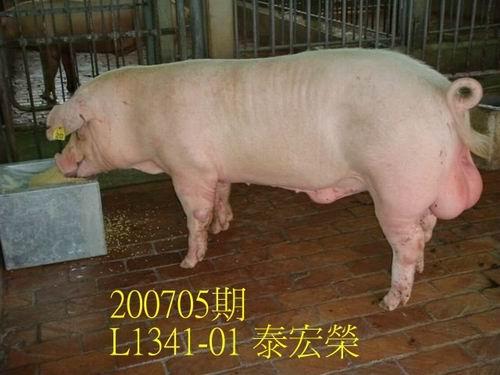 中央畜產會200705期L1341-01拍賣照片