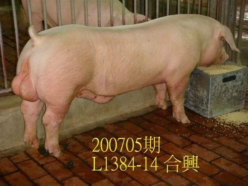 中央畜產會200705期L1384-14拍賣照片