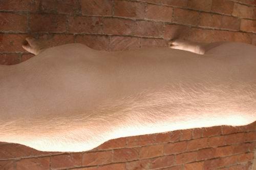 中央畜產會200705期L0170-08體型-體軀相片