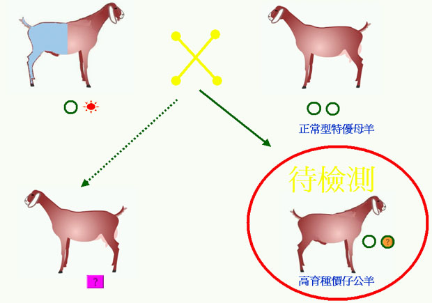 羊生長遲緩(黏多醣症)基因的檢測與遺傳圖示-3