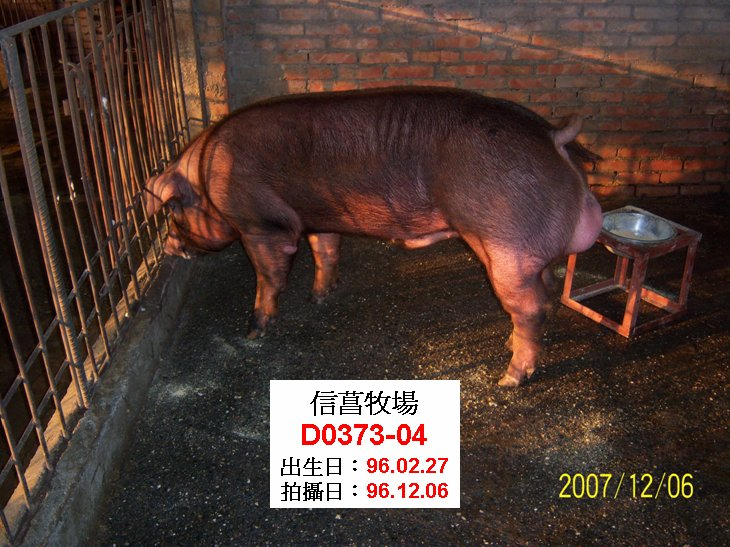 台灣種豬發展協會9608期D0373-04側面相片