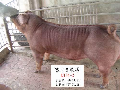 台灣種豬發展協會9701期D0154-02側面相片