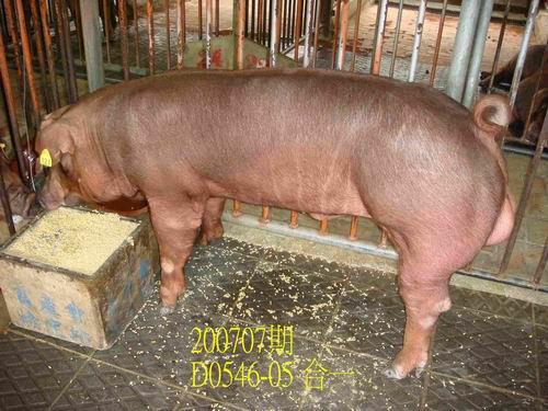 中央畜產會200707期D0546-05拍賣照片