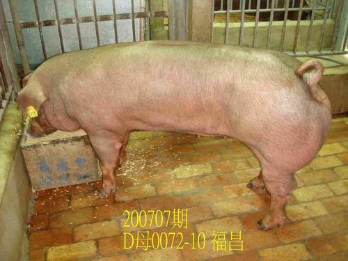 中央畜產會200707期D0072-10拍賣照片