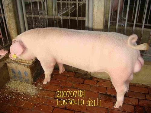 中央畜產會200707期L0930-10拍賣照片