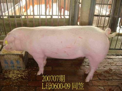 中央畜產會200707期L0600-09拍賣照片