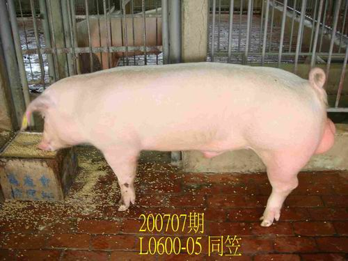 中央畜產會200707期L0600-05拍賣照片