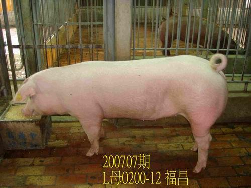 中央畜產會200707期L0200-12拍賣照片