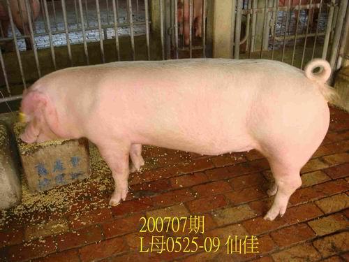 中央畜產會200707期L0525-09拍賣照片