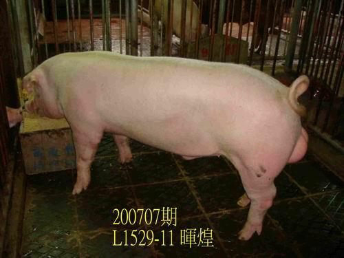 中央畜產會200707期L1529-11拍賣照片