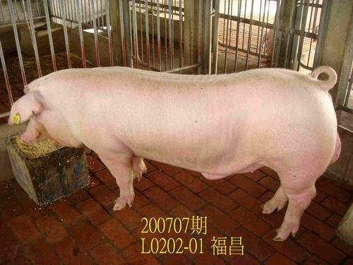 中央畜產會200707期L0202-01拍賣照片