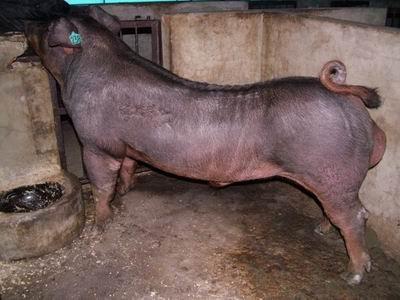 台灣動物科技研究所竹南檢定站9606期D0323-01拍賣相片