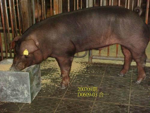 中央畜產會200709期D0609-03拍賣照片