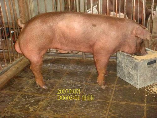 中央畜產會200709期D0603-01拍賣照片