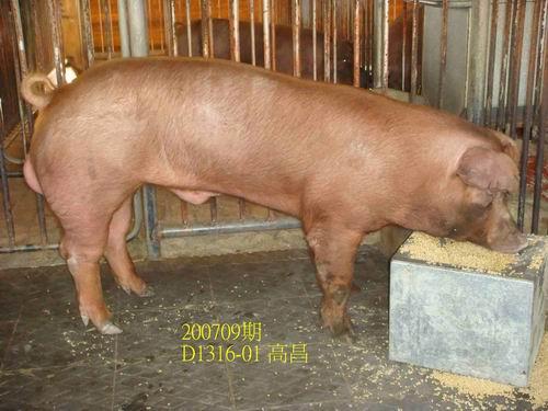 中央畜產會200709期D1316-01拍賣照片