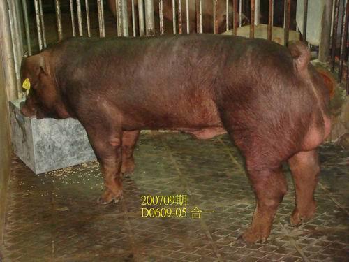 中央畜產會200709期D0609-05拍賣照片